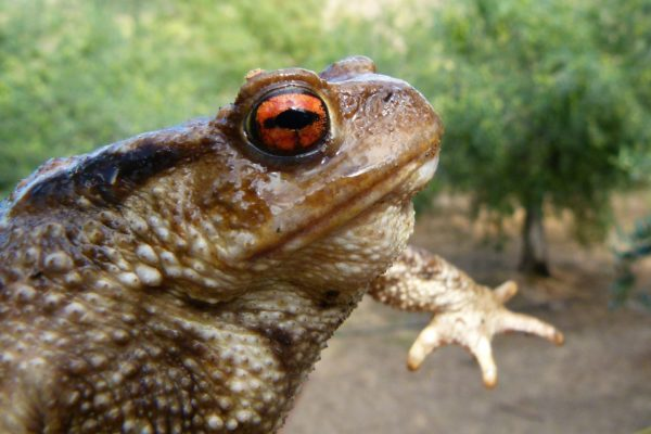 Eye of Newt and Wart of Toad…